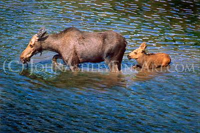 """Moose March."""