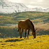 Horse in autumn near Telluride