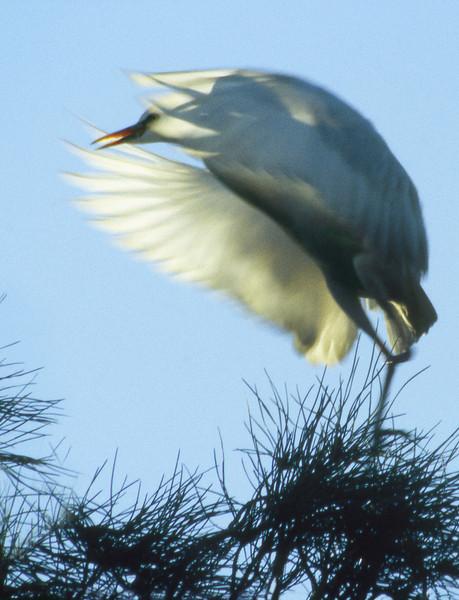 Hern Nesting, 2000<br /> Film Photography