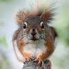 Surprised Squirrel