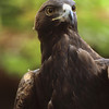 Eagle Stare, 2000<br /> Film Photography
