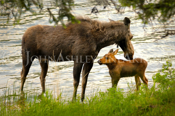 """Moose Mom."""