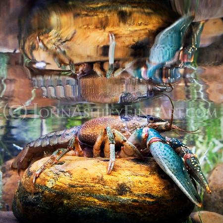 """Crayfish Reflections."""