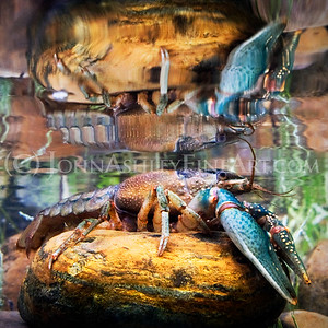 """Crayfish Reflections."""