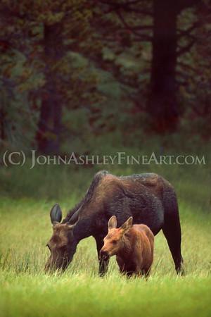 """""""Moose Meadow."""""""
