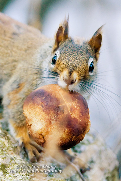 Squirrel with Mushroom
