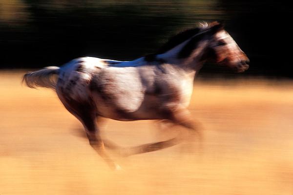 #120 Running Horse