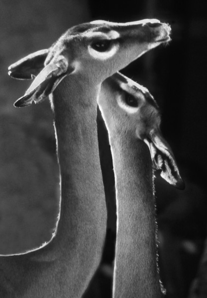 Perfect Form, 1997<br /> Black and White Film Photography