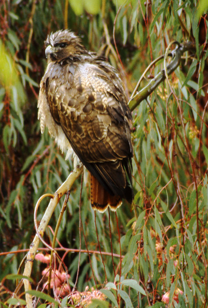 Wet Hawk, 1998<br /> Film Photography