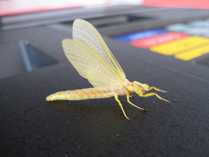 I have no idea what kind of bug this is.