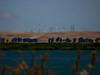 Windmills across the San Joaquin River<br /> Antioch Dunes National Wildlife Refuge, Contra Costa Co., CA 8/11/10