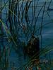 Antioch Dunes National Wildlife Refuge, Contra Costa Co., CA  9/2/10
