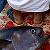 Fish & Feet
