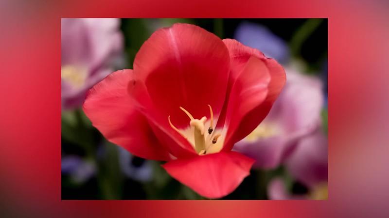 Spring Flowers  Arboretum Dallas