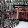 <h4> Fushimi Inari Taisha</h4>Kyoto, Japan