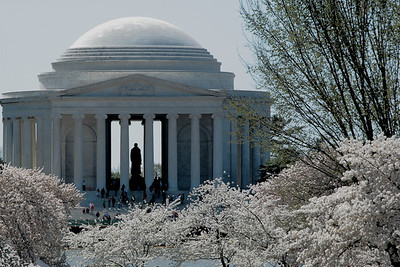 Jefferson Memorial during Cherry Blossom Festival, April 2010, Washington, D.C.