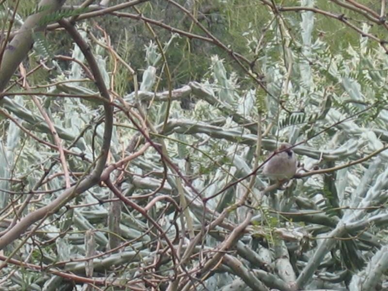 Silent Snowbird <br /> Poor bird is outside looking in.