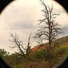 After the fires, Oak Creek Canyon, AZ