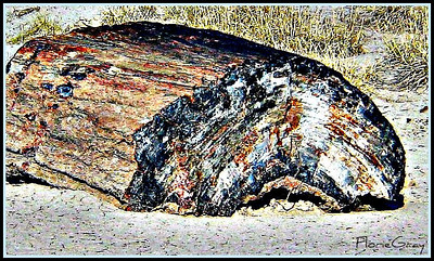 Beautiful, ancient petrified wood  Petrified Forest, Arizona