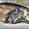 Beautiful, ancient petrified wood <br /> Petrified Forest, Arizona