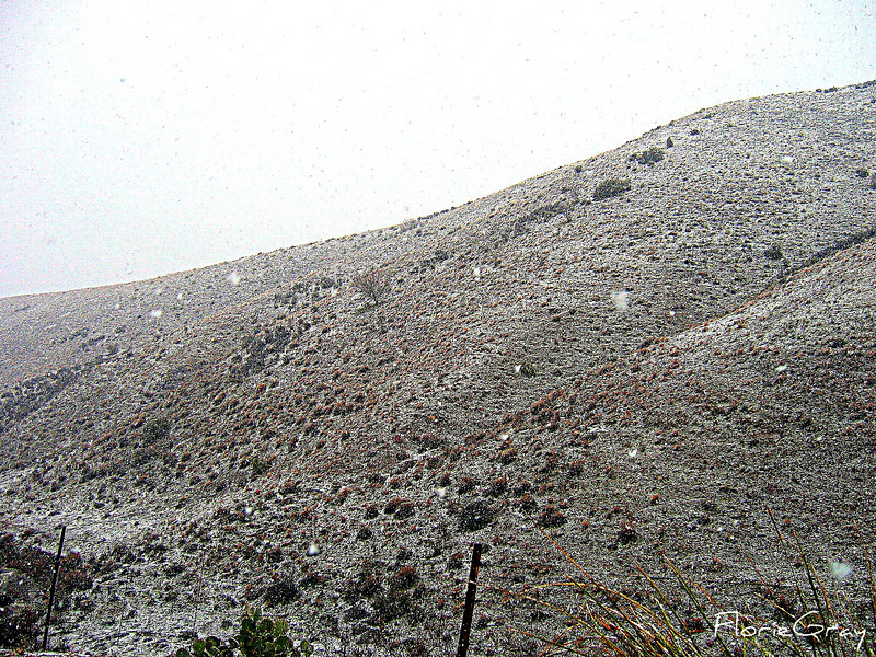 Time to Turn Around <br /> Snow flurries turned into blizzard conditions as we climbed higher up the mountain on our way to Jerome, AZ.  Please note:  This is a COLOR photo.