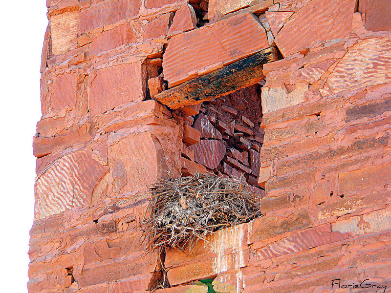 "Nesting in the Ruins <br /> Ruins of former ""Observatory"", near Meteor Crater, Old Rt. 66 AZ"