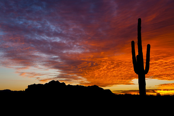 Standing Tall against the Sunset Sky, Superstitions, AZ