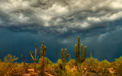 Arizona Desert Monsoon