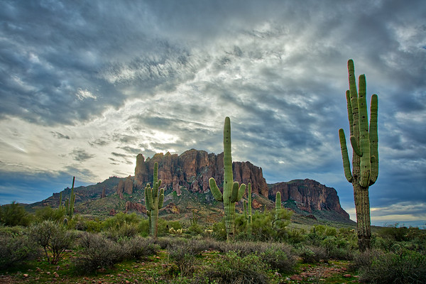 Majestic Saguaros against the Superstition Mountains