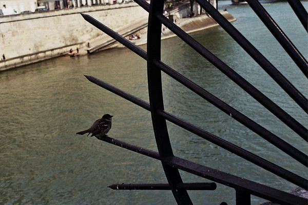 Bird along the Seine