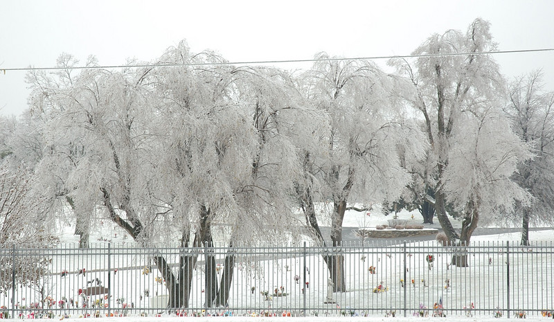 Icy trees in the Floral Hills Cemetery.