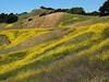 Lafayette Ridge - Briones East Bay Regional Park