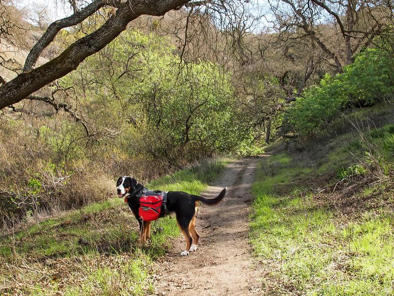 Alamo Trail