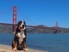 Trekker by the Golden Gate