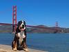 Trekker by the Golden Gate