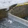 Macaulay Salmon Hatchery, Juneau, Alaska