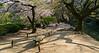 Ritsurin Park during cherry blossom season, Takamatsu, Japan