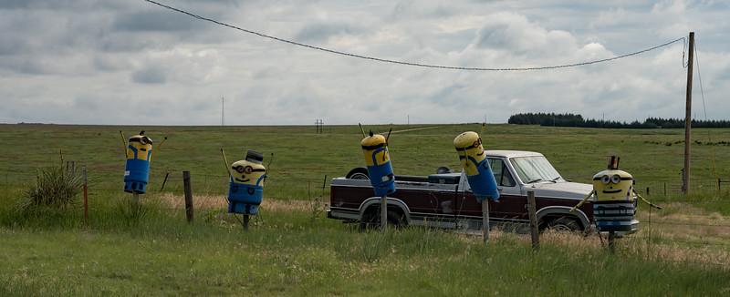 Minons in Colorado