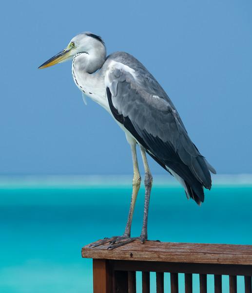 Visitor at our water villa at the Conrad, Maldives
