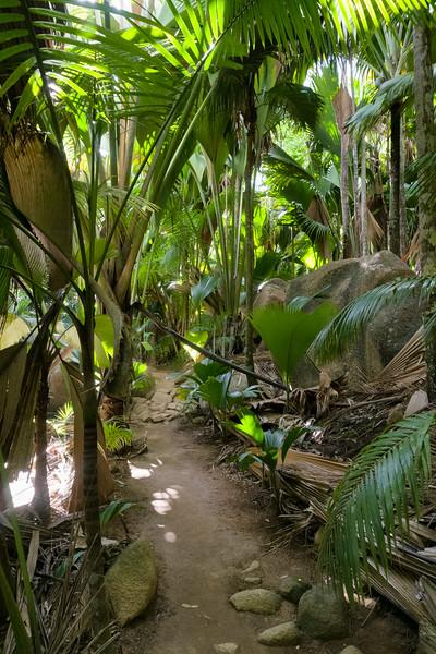 Vallee de Mai, Praslin, Seychelles