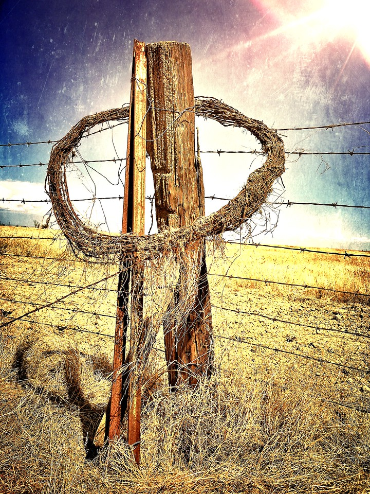Barb Wire Halo