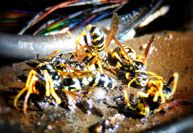 I Am Called Wasp Slaughterer and Colony Collapser
