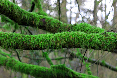 Moss growing on a tree.