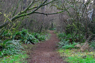 A path into the forrest.