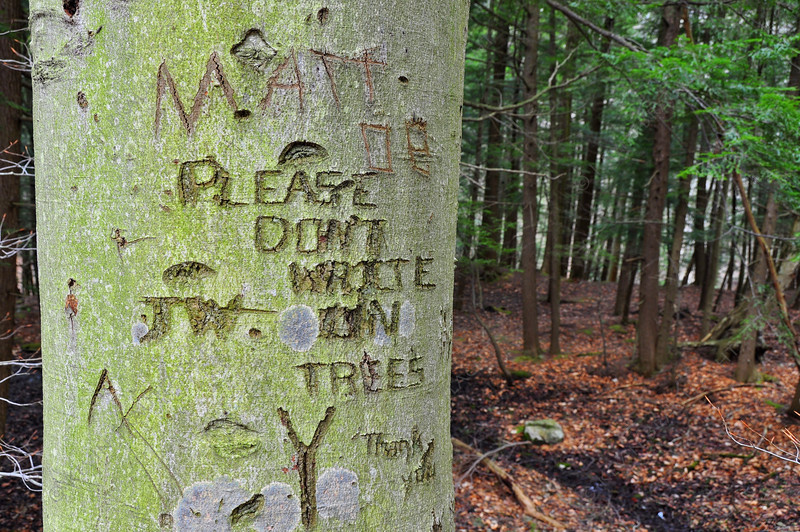 Please don't write on trees