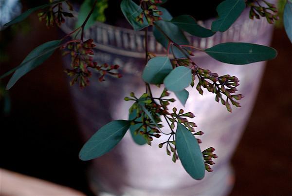 arrangements in florals