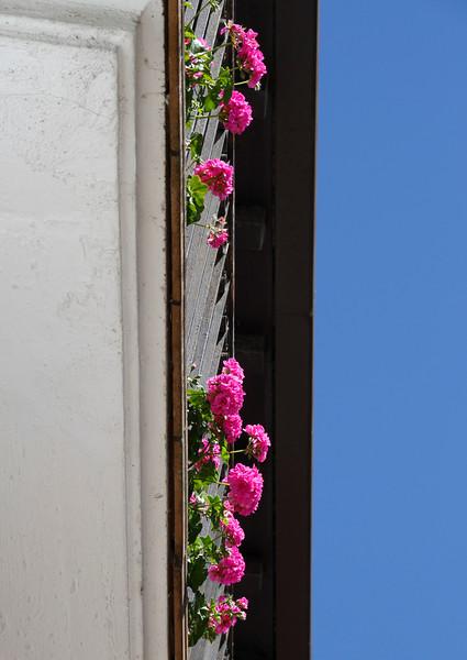 Arranging Pink