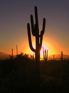 Saguaro Nat Park, nov 2012