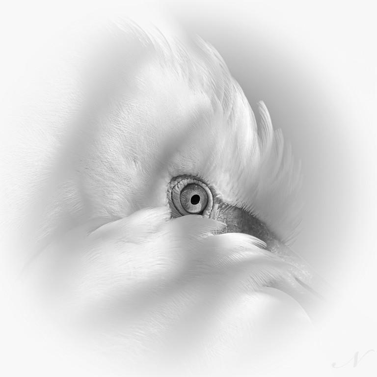 """WPP1140  """"Egret Eye"""""""
