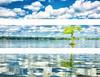 """WPP1592  """"Lone Cypress Tree Triptych"""""""